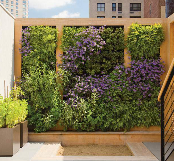 Qu tipo de plantas podemos sembrar en un jard n vertical for Jardin que planter en janvier